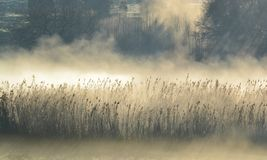 Niebla de la mañana…. Imagen de archivo