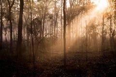 Niebla 3 de la mañana Fotos de archivo libres de regalías