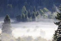Niebla de la mañana fotografía de archivo