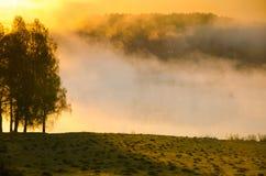 Niebla de la mañana alrededor del lago crezca el abedul Foto de archivo