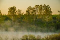 Niebla de la mañana alrededor del lago crezca el abedul Fotografía de archivo