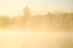 Niebla de la mañana alrededor del lago crezca el abedul Fotos de archivo