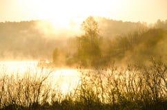 Niebla de la mañana alrededor del lago crezca el abedul Fotos de archivo libres de regalías