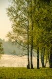 Niebla de la mañana alrededor del lago crezca el abedul Imagen de archivo libre de regalías