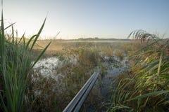 Niebla de la mañana, cazando para los pájaros de juego imagen de archivo libre de regalías