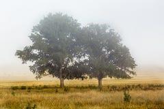 Niebla de la mañana con dos árboles en la niebla foto de archivo
