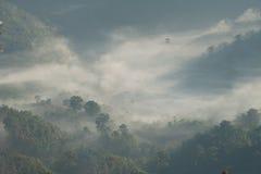 Niebla de la mañana con la luz Fotos de archivo