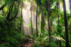 Niebla de la mañana del EL Yunque Fotografía de archivo libre de regalías