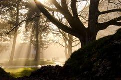 Niebla de la mañana del otoño en el parque Imagen de archivo libre de regalías