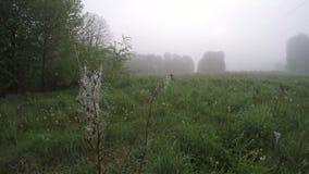 Niebla de la mañana del otoño en prado y viento en araña-web, lapso de tiempo metrajes
