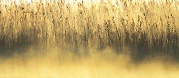 Niebla de la mañana e hierba de lámina Imágenes de archivo libres de regalías