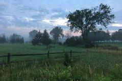 Niebla de la mañana en el prado Fotos de archivo