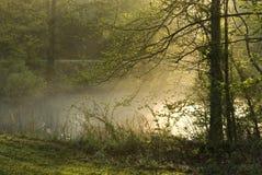 Niebla de la mañana en la charca Imagen de archivo libre de regalías