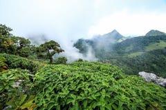 Niebla de la mañana en la selva tropical tropical imagen de archivo libre de regalías