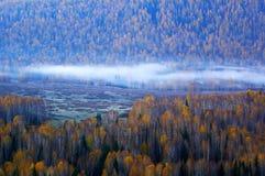 Niebla de la mañana en los abedules Fotos de archivo libres de regalías