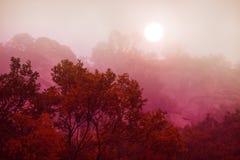 Niebla de la mañana en otoño Imágenes de archivo libres de regalías