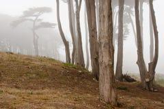 Niebla de la mañana en San Francisco fotografía de archivo libre de regalías