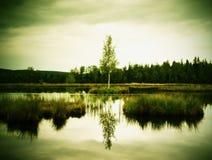 Niebla de la mañana en un lago en pantano Abedul verde fresco en centro en la pequeña isla Imágenes de archivo libres de regalías