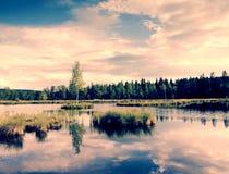 Niebla de la mañana en un lago en pantano Abedul verde fresco en centro en la pequeña isla Fotos de archivo