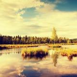 Niebla de la mañana en un lago en pantano Abedul verde fresco en centro en la pequeña isla Imagenes de archivo