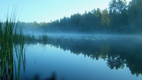 Niebla de la mañana sobre el agua en los rayos del sol naciente almacen de video