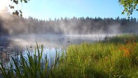 Niebla de la mañana sobre el agua en los rayos del sol naciente metrajes
