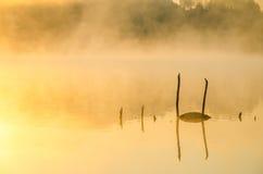 Niebla de la mañana sobre el lago Imagen de archivo libre de regalías