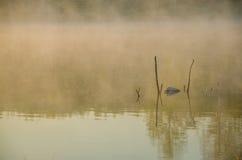 Niebla de la mañana sobre el lago Fotos de archivo