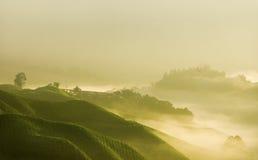 Niebla de la mañana Fotos de archivo libres de regalías