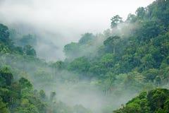 Niebla de la mañana de la selva tropical Imagen de archivo libre de regalías