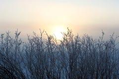 Niebla de la madrugada Imágenes de archivo libres de regalías