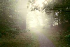 Niebla de la madrugada en bosque Fotos de archivo libres de regalías