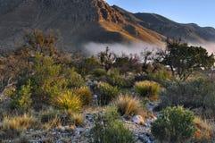 Niebla de la madrugada - montañas de Guadalupe fotografía de archivo libre de regalías