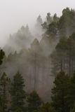 Niebla de la montaña fotografía de archivo