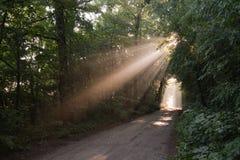 Niebla de Sun en bosque Foto de archivo libre de regalías