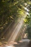 Niebla de Sun en bosque Fotografía de archivo