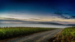Niebla de Timelapse sobre un campo del maíz
