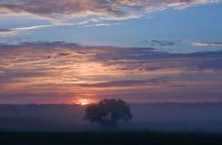 Niebla del árbol de la salida del sol Imagen de archivo