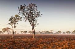 Niebla del amanecer en el australiano interior Darwin, Territorio del Norte Imagen de archivo libre de regalías