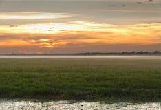 Niebla del amanecer en el australiano interior Darwin, Territorio del Norte Foto de archivo libre de regalías