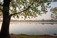 Niebla del amanecer sobre el lago Primavera Pájaros que circundan sobre el agua El roble enorme reveló las hojas verdes Foto de archivo libre de regalías