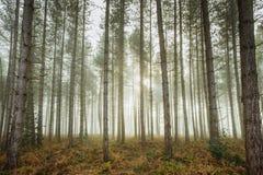 Niebla del arbolado Fotos de archivo