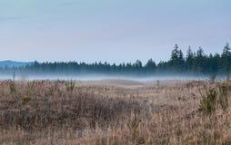 Niebla del balanceo en valle fotos de archivo