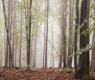 Niebla del bosque imágenes de archivo libres de regalías