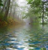 Niebla del bosque Imagen de archivo libre de regalías