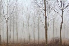 Niebla del bosque del invierno Fotografía de archivo libre de regalías