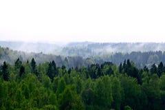 Niebla del bosque en un top de un mountian Imágenes de archivo libres de regalías