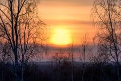 Niebla del cielo del sol del abedul de la puesta del sol Foto de archivo