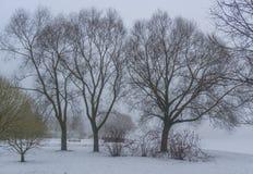 Niebla del invierno Imagen de archivo libre de regalías