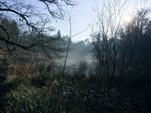 Niebla del invierno Foto de archivo libre de regalías